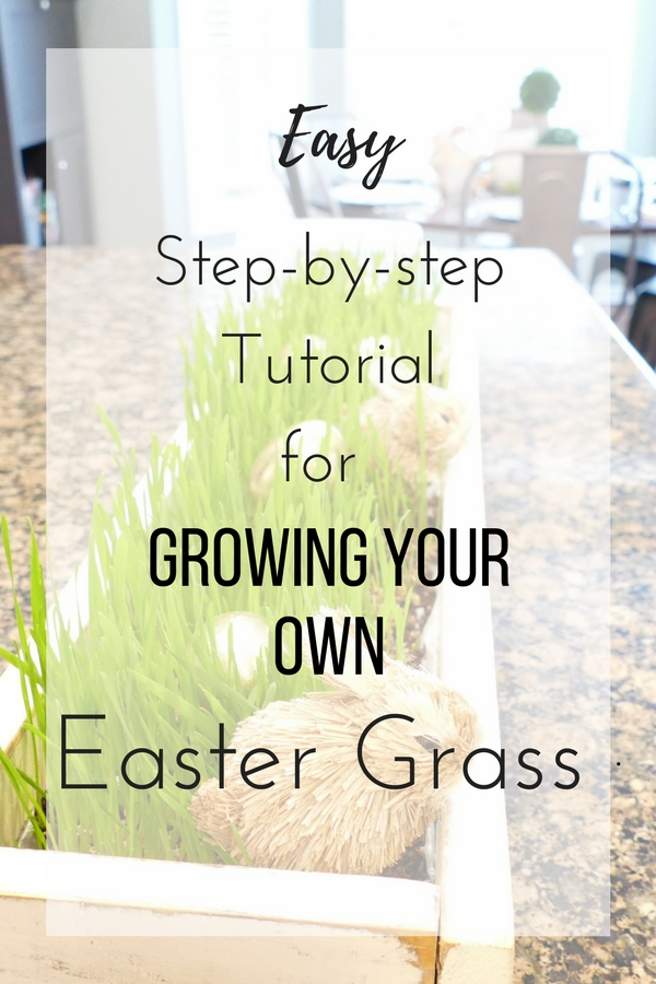 Step-by-step Tutorial for Growing your own Easter Grass