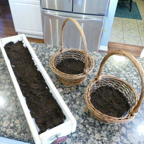 A tutorial on growing your own Easter grass with photos